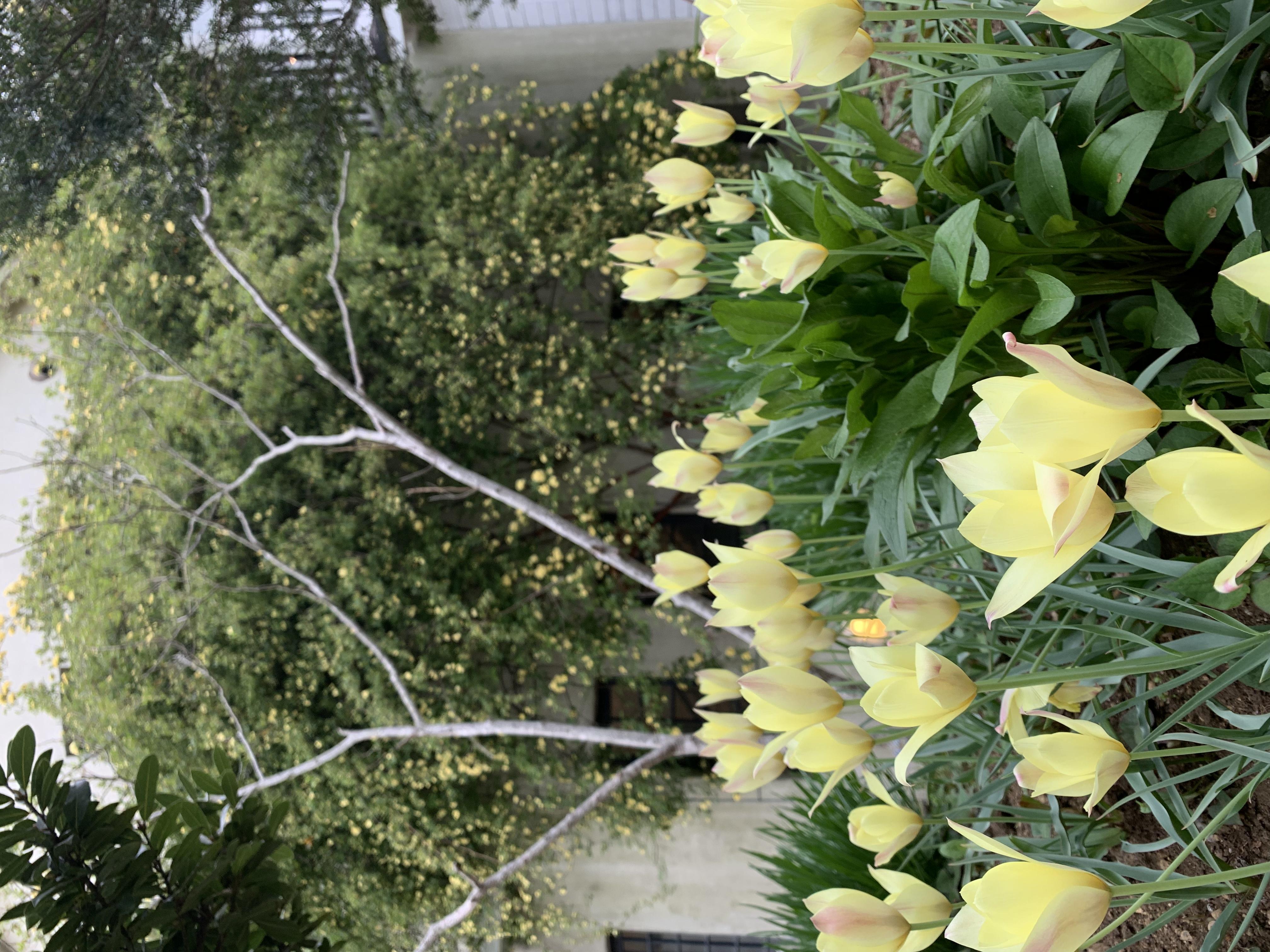 本日のブログは 【 貝殻亭リゾート&ガーデン春の園遊会!】です。