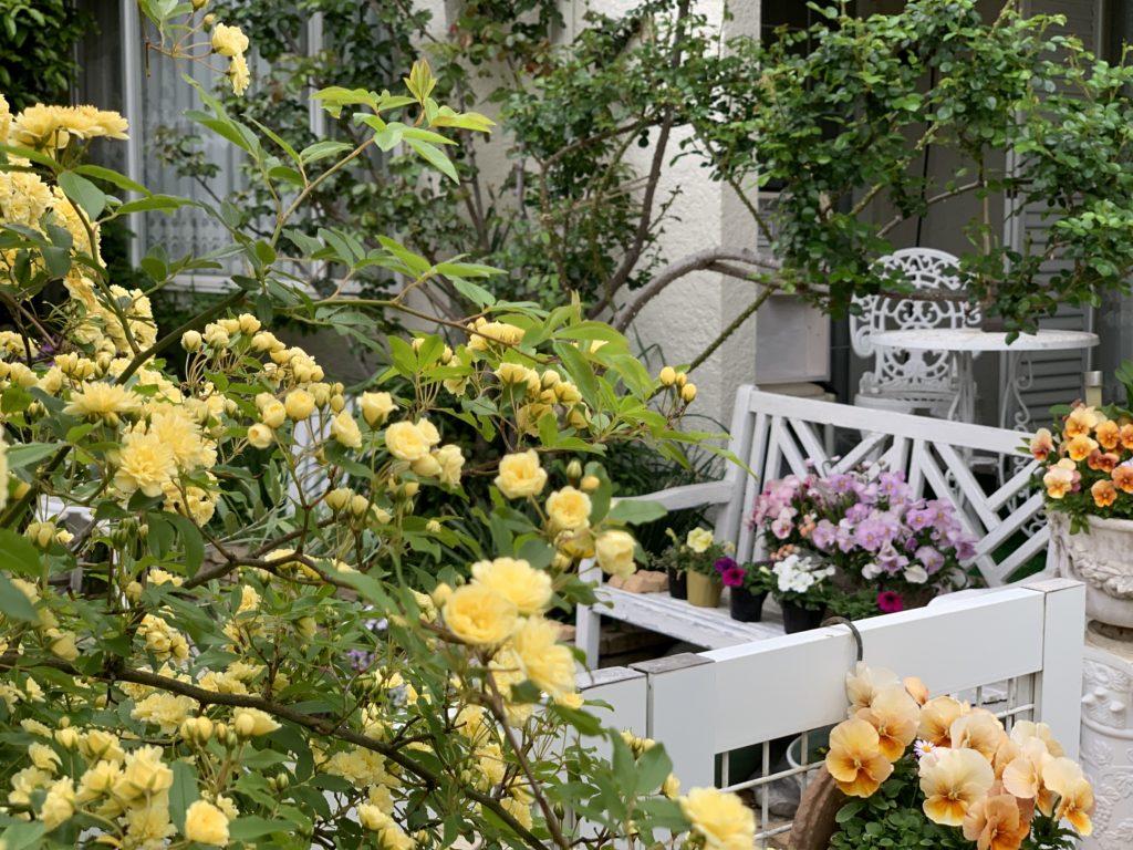本日のブログは【昨年より遅い薔薇の季節!】です。