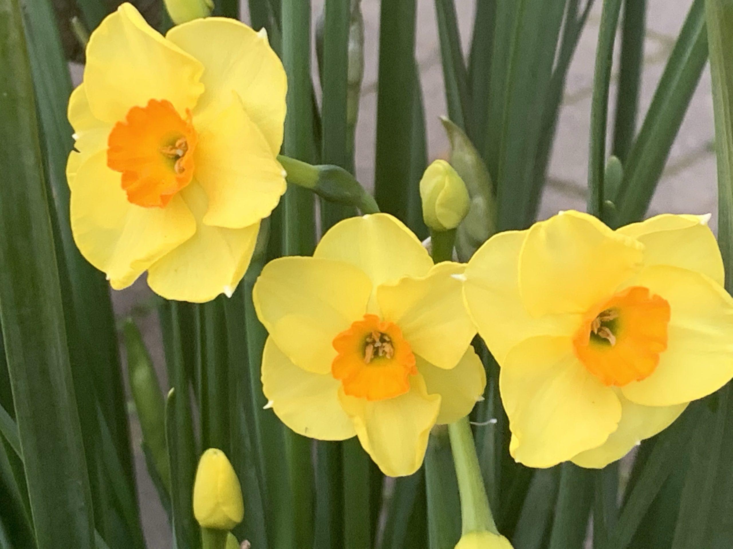 本日のブログは【3月に突入!春の訪れとコロナの行方…】です。